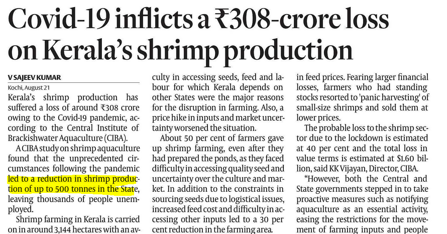 Shrimp production is reduced by 500 tonnes