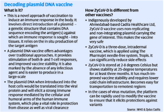PLASMID DNA VACCINE